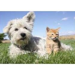 Psík a mačička