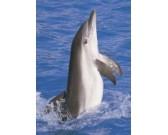 Delfín - DETSKÉ PUZZLE