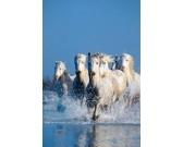 Kone vo vode
