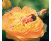 Posťel z ruží