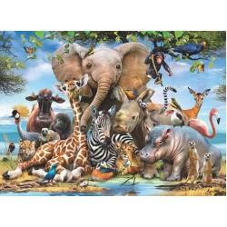 Veselé zvieratká