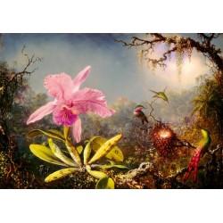 Orchidea a tri kolibríky