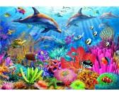 Delfíní koralový útes