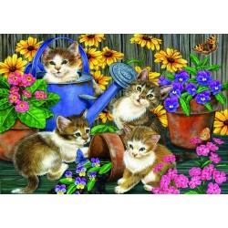 Mačičky na záhrade