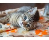 Mačička - DETSKÉ PUZZLE