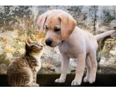 Mačiatko a šteňa