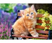 Ryšavá mačička