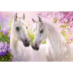 Koňská romantika