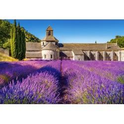 Levanduľa v Provence