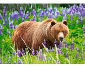 Medveď na lúke - DETSKÉ PUZZLE