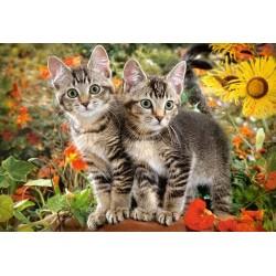Dve mačičky