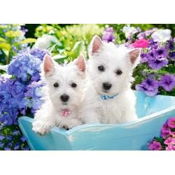 Biele šteniatká - DETSKÉ PUZZLE