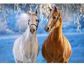 Kone v zime - DETSKÉ PUZZLE