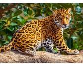 Malý jaguár - DETSKÉ PUZZLE