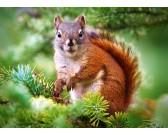 Veverička - DETSKÉ PUZZLE