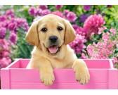 Štena labradora v ružovej bedničke - DETSKÉ PUZZLE