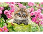 Mačiatko na záhrade