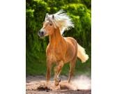 Bežiaci hnedý kôň