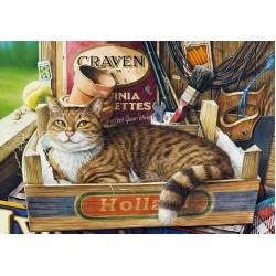 Mačka v krabici