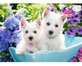 Bielé šteniatká - DETSKÉ PUZZLE