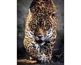 Kráčajúci jaguár
