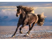 Slobodný kôň