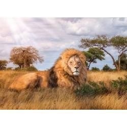 Kráľ savany