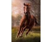 Hnedý kôň