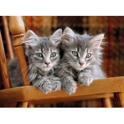 Malé mačičky