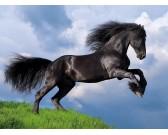 Čierny kôň