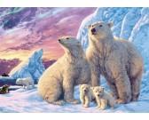 Ľadové medvede