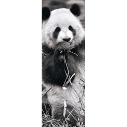 Pandy v tráve - PANORAMATICKÉ PUZZLE