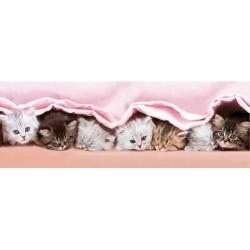 Mačiatka pod dekou - DETSKÉ PUZZLE