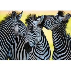 Tri zebry