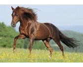 Kôň na lúke