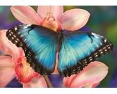 Motýľ na orchidei