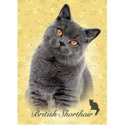Britská mačka - MINI PUZZLE