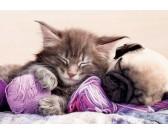Spiaca mačka