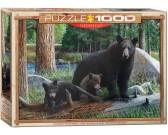 Medvedia rodinka