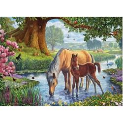 Kone v potoku