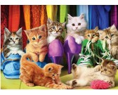 Mačky v šatníku