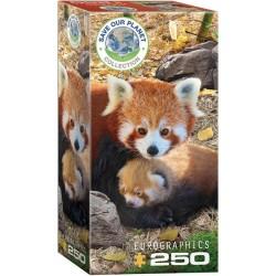 Pandy červené