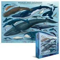 Veľryby a delfíny