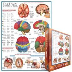 Mozog - schéma