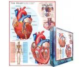 Srdce- schéma