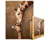 Žirafa s mláďaťom