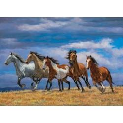 Stádo koní