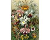 Exotická kytica