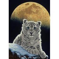 Leopard vo svite mesiaca