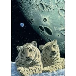 Snežné leopardy